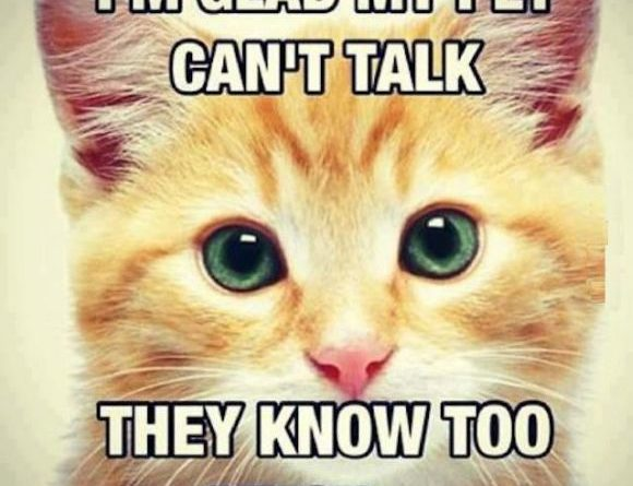 Talk Cat Humor