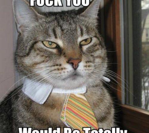 Professional Cat Cat Humor