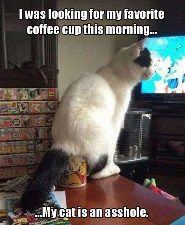 Nothing Says Good Morning Like    - Cat Humor