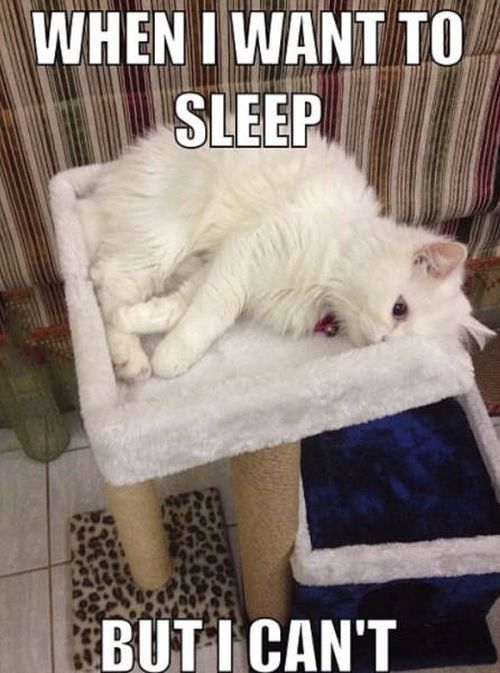 When I Want To Sleep Cat Humor