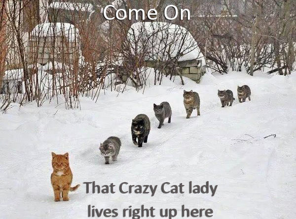 Image result for snow cat humor